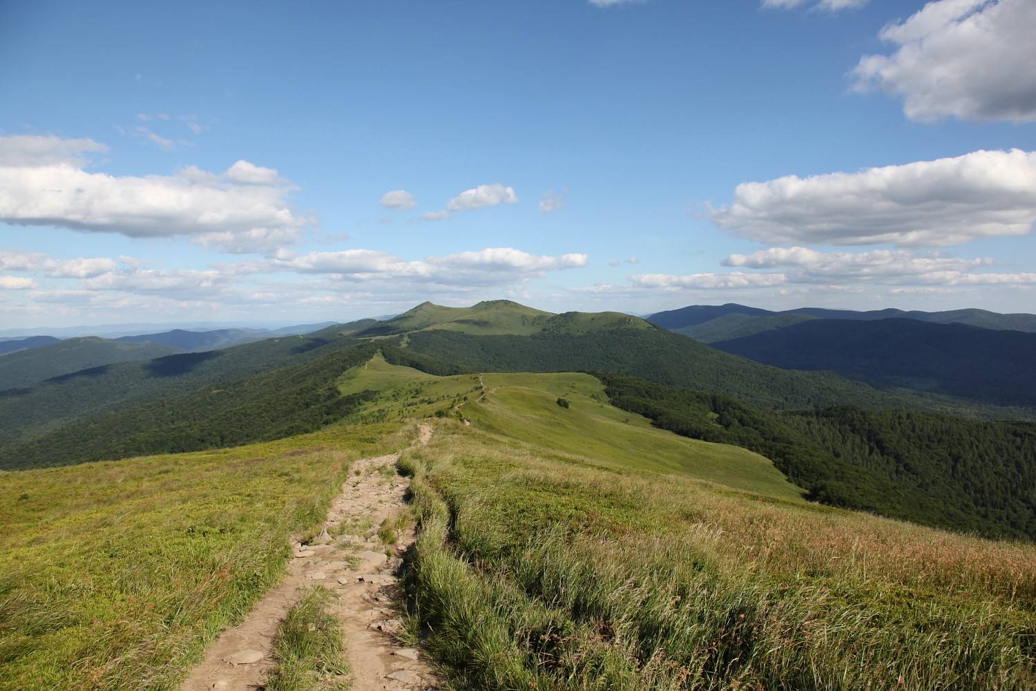 View of the Bieszczady Mountains, in the background is visible the highest peak called Tarnica (photo by Sebastian R. Bielak)